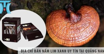 Địa chỉ bán nấm lim xanh tại tỉnh Quảng Nam uy tín số 1