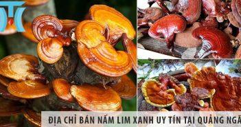 Top 1 địa chỉ bán nấm lim xanh tại tỉnh Quảng Ngãi